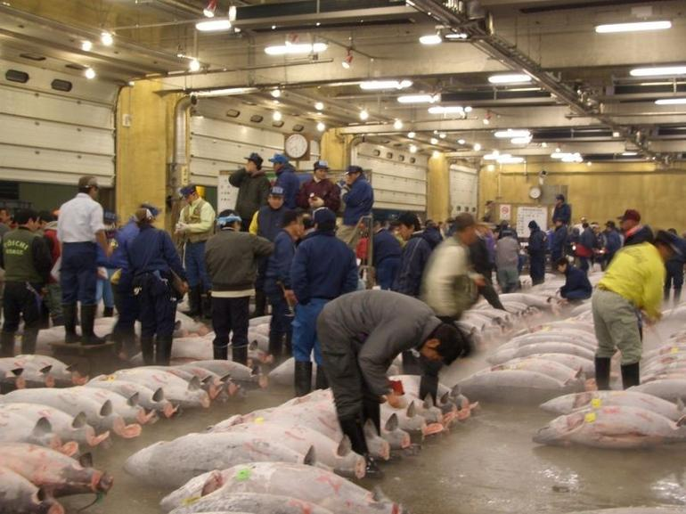 Tokyo Fish Market - Tokyo