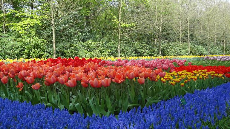 flowers - Amsterdam