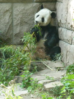 The Panda Zoo , 123gabyn - June 2012