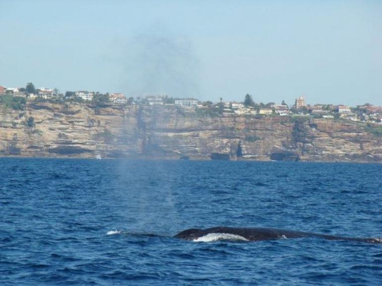 Sydney Whale Watching - Sydney