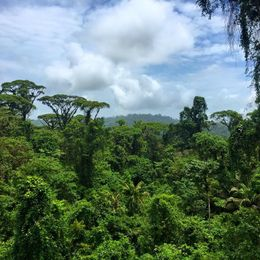 View from the zipline canopy!, Katiemo - May 2015