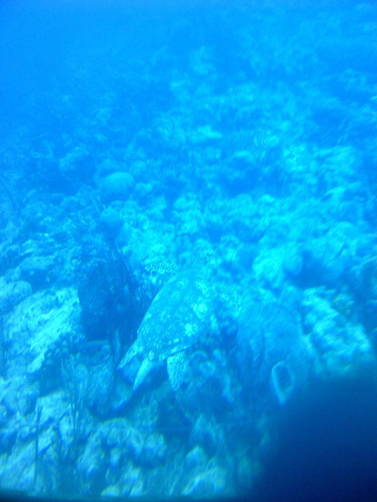 Below the ocean - Barbados