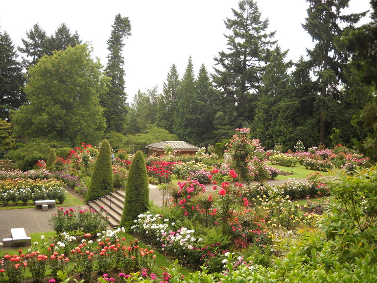 International Rose Test Garden, Portland - Portland