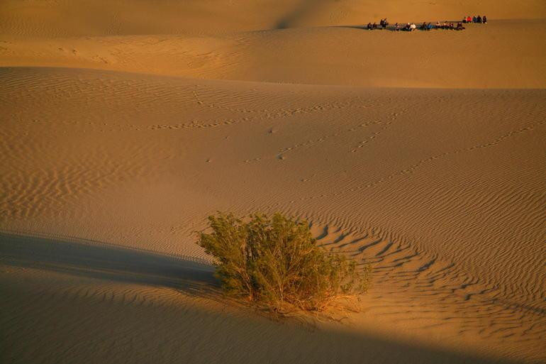 Love the Desert - Las Vegas