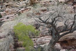 Red Rock Canyon, Amanda H - March 2015