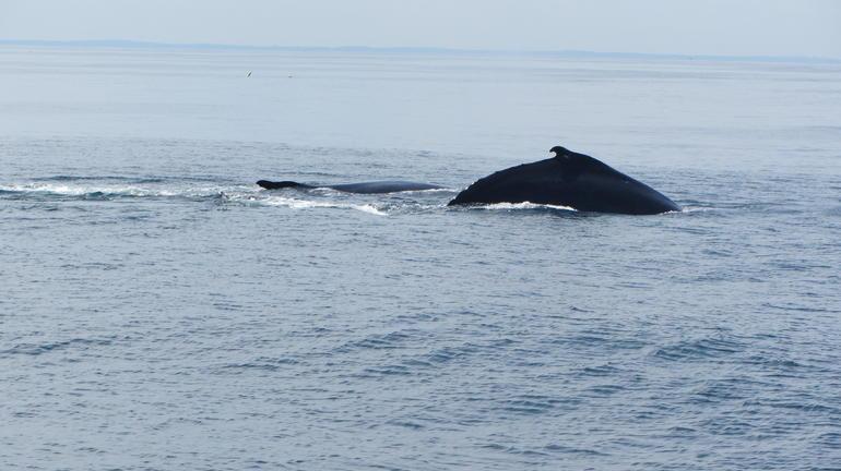 Whale - Boston