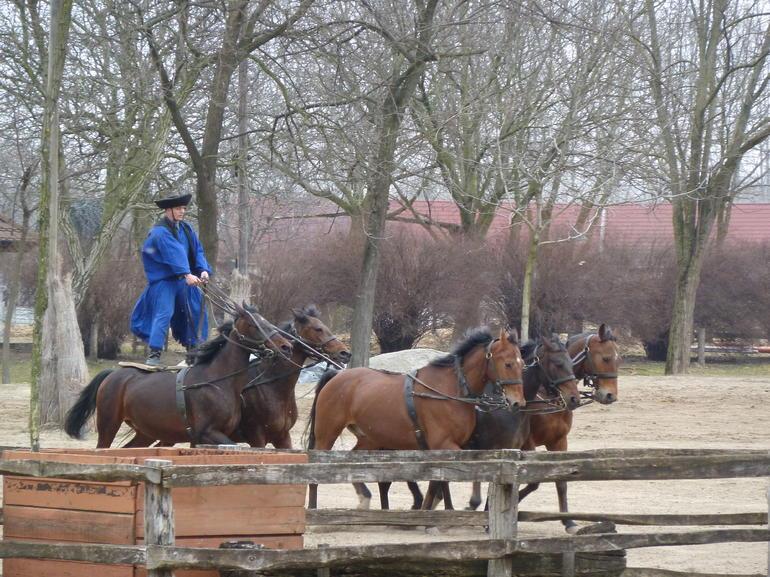 Horse riding - Budapest