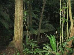 We went on an evening jungle walk - November 2012
