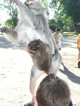 This is a monkey and her baby on top of my son's head and reaching for a peanut that my 6ft husband was feeding her. They are very friendly but as you can see they will jump on you if you let them -- ... , Gail F - July 2009