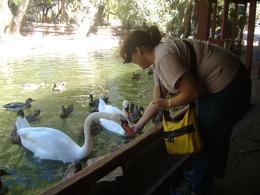 Feeding the swans before horseback riding, Linda W - September 2009