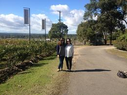 In front of Brokenwood vineyard, Cat - November 2013