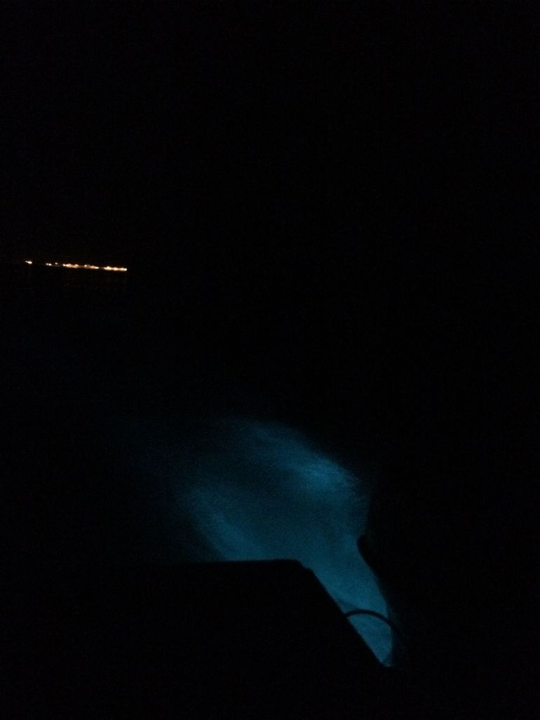 Covid Ready - Mystic Luminescent Lagoon Night Cruise in Jamaica photo 9