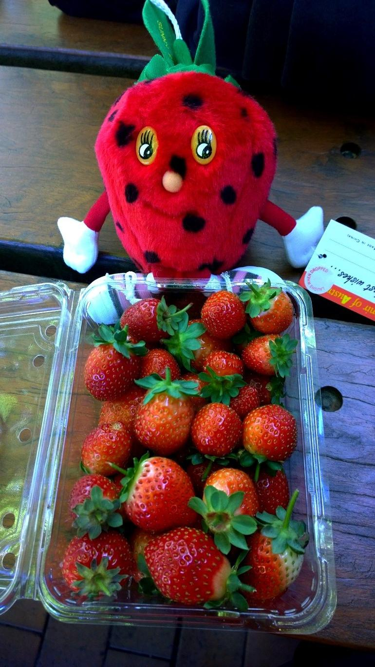 Mornington Peninsula including Strawberry Farm Day Tour from Melbourne photo 12