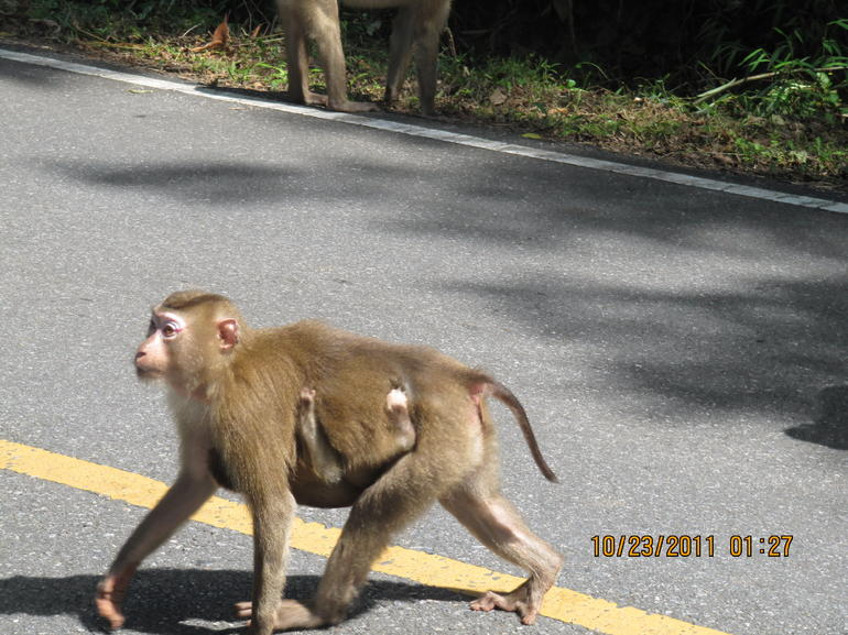 Thailand National Park Monkeys - Bangkok