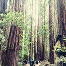 Experiencia en Muir Woods y Sausalito, San Francisco, CA, ESTADOS UNIDOS