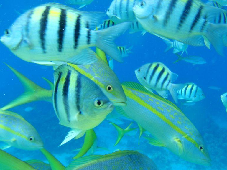Fish in Nassau - Nassau