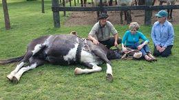 estancia ombu de areco, gaucho demostration, horse , Rainer F - October 2015
