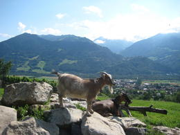 High on a hill with a lonely goat herd . . . , Reba A - July 2012