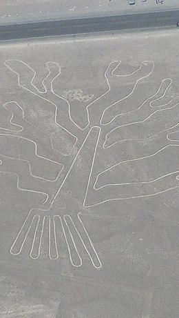 Tree - Nazca Lines, October 2017 overflight. , Shirley P - November 2017