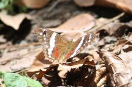 Beautiful butterfly , Barbara D - August 2011