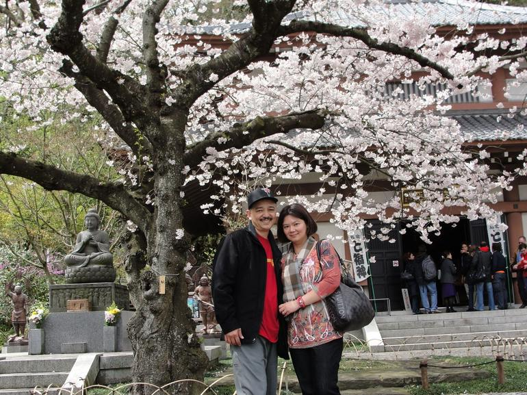 Cherry Blossom - Tokyo