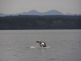 On the Whale Watching tour in June 2016 , Margaret A - June 2016