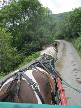 Just our wonderful pony guide, Suzie taking us up the steep roads in the Gap of Dunloe. , Mary M - July 2015