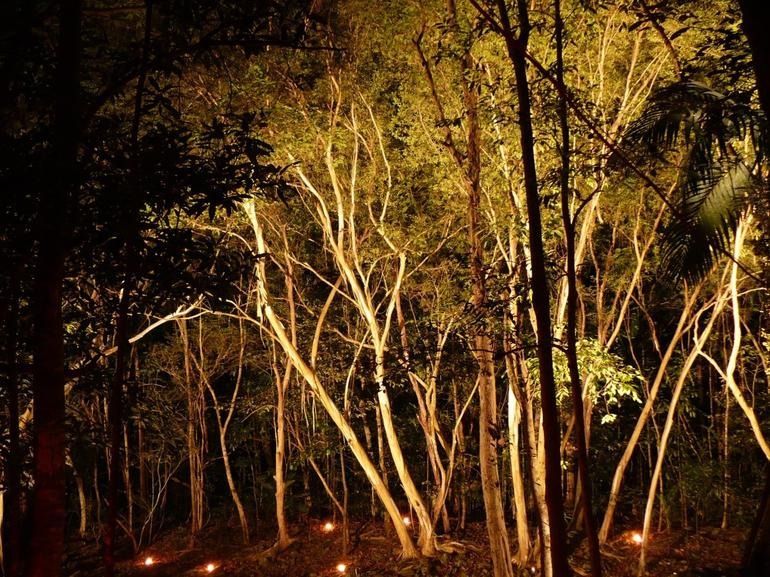 The forest lit by candles - Cairns & the Tropical North