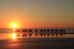 Our camel train as the sun was setting. , Marion E - May 2017