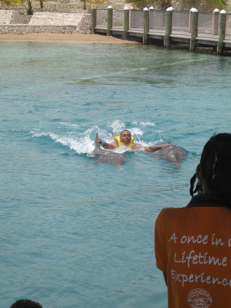 Dolphin Swim - Puerto Plata
