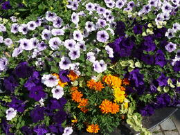 The old town is full of similar beautiful displays , Michael P - August 2014