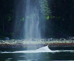 This was the whale in the cove where we were paddling. , smk - June 2013