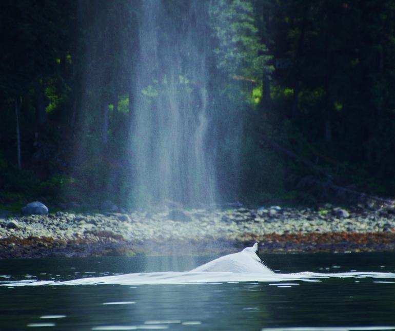 sea kayaking - Juneau