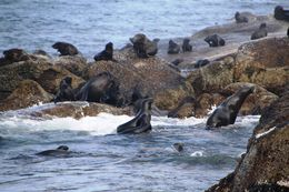 Cape Fur Seals on Seal Island , BethanieKay - April 2016