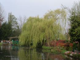 A view across the lily pond., Richard T - May 2009