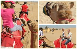 Fun tour.... close encounter with the camels. , Petru Rosenthorn - April 2015
