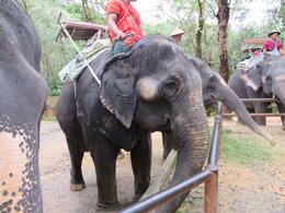Elephant at the camp. , Lauren - December 2013