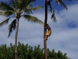 The young man illustrated how to climb a coconut tree., Donald J - March 2010