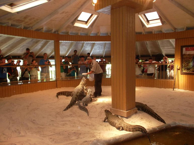 Krokodile - Miami