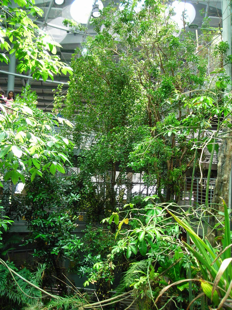Rainforest Canopy.JPG - San Francisco