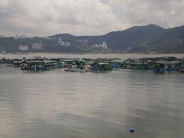 Sam Mun Tsai fish farming, Diana F - July 2009
