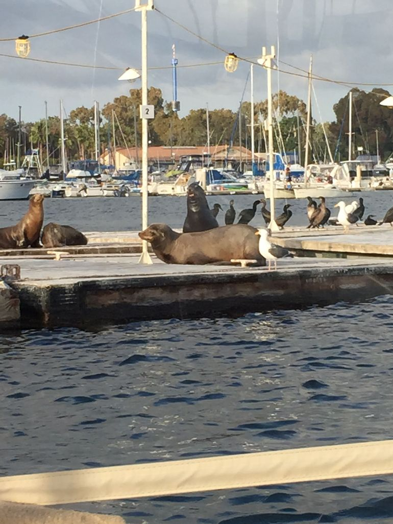 Sea lions photo 12422878 770tall