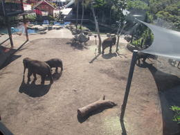 This was a beautiful view of the Elephants from our sky cab on our way up to the zoo., Nicks - December 2013