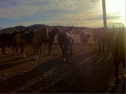 Great picture of the steeds in the sunset., indieandiejones - May 2013