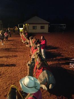 Camel sunset tour - November 2013
