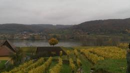 Over looking a family owned vineyard and the Danube River. , Hanna G - December 2014