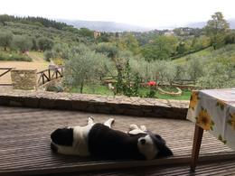 Falco overlooking Florence from the dining room. , Julie T - October 2016