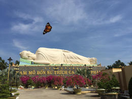 A butterfly ovetr the Reclining Budha in The Ving Trang pagoda , Mariusz M - January 2017