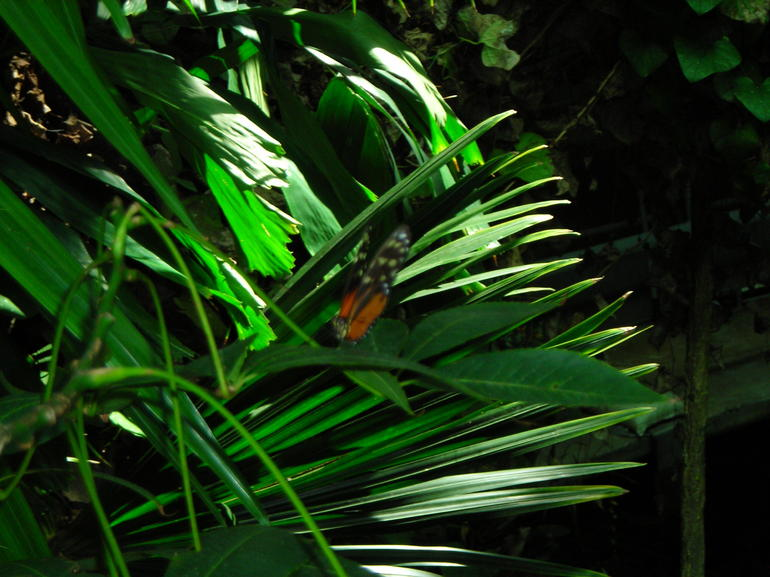 Butterfly.JPG - San Francisco