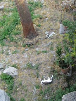 Here are some cats lounging around the ruins, they live here with the sanctuary., Sherry D - August 2010